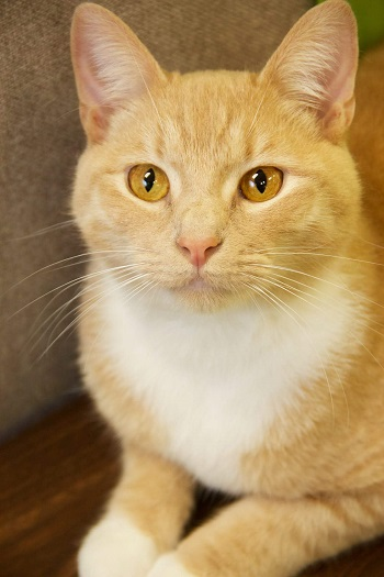 Adopt a Shelter Pet Frederick MD