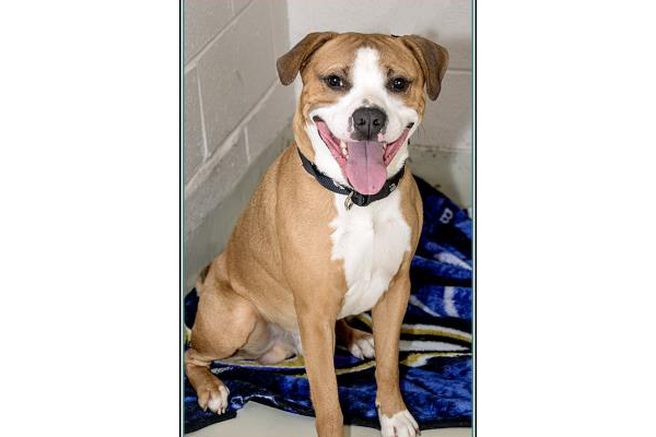 Adoptable Animals in Frederick County MD